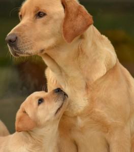 Education canine La Roche sur Yon, les assistantes