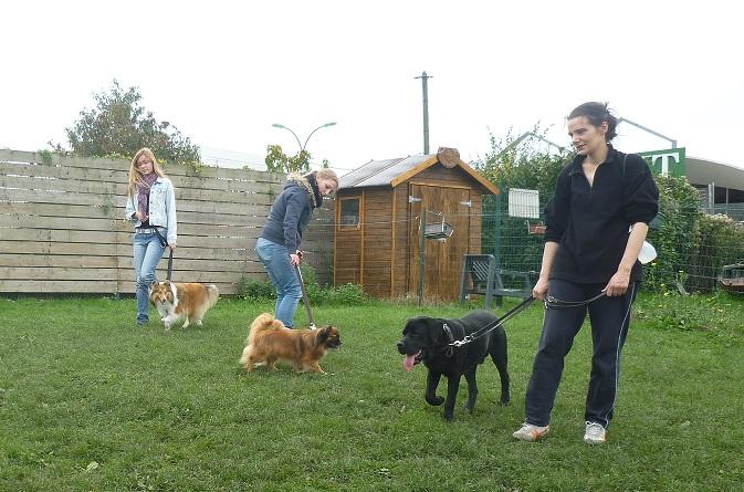 Dressage chien La Roche sur Yon en cours collectifs