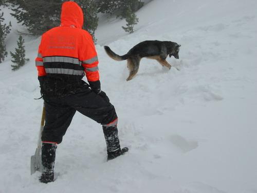 Dressage chien Vendée - Chien au pied
