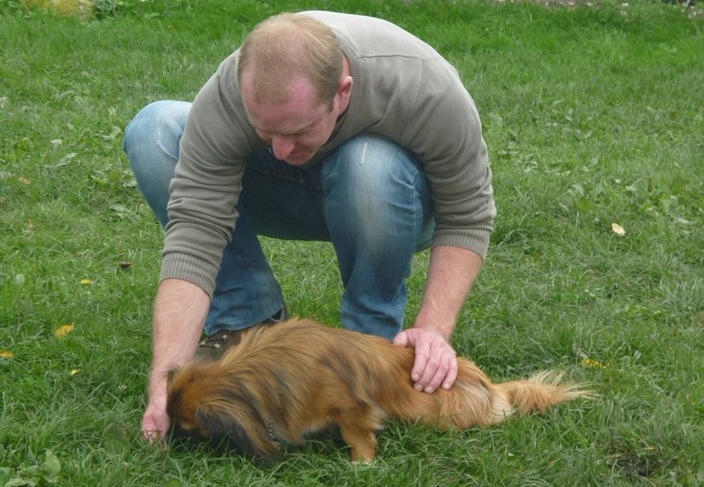 Site rencontre chien