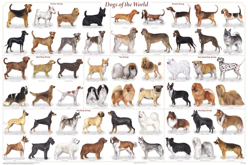 siteduchien : retrouvez le chien sous toutes les formes