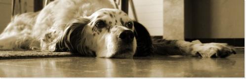 Préparer l'arrivée d'un chien à la maison - Chien au pied