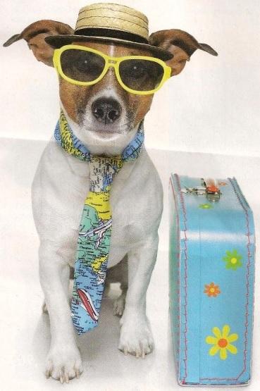Dresseur de chien en Vendée : Les modes de garde