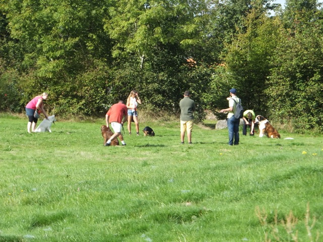 Chien au pied - Education canine La Roche sur Yon