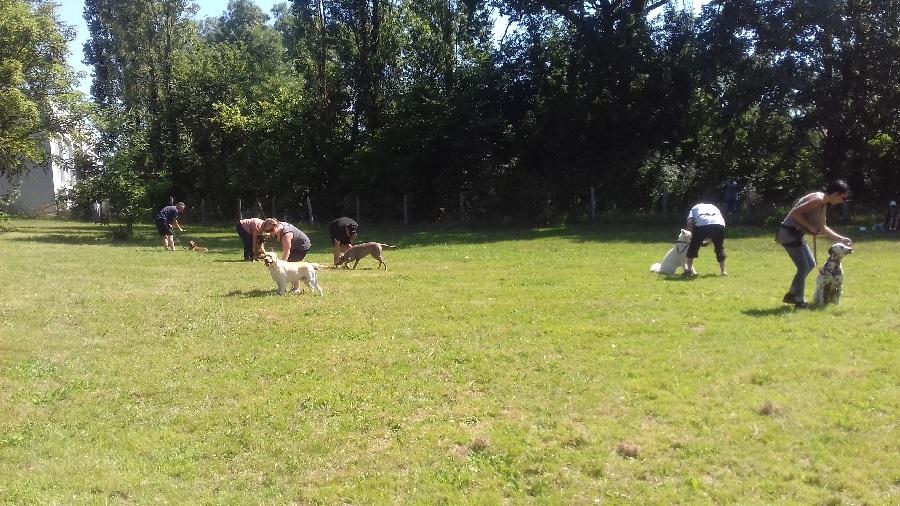Cours collectif d'éducation de chien en Vendée - Chien au pied