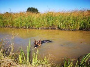 Maiko dans l'eau